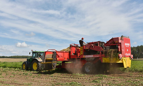 ВБрянской области начался сбор картофельного урожая